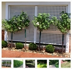 Professional Landscape design artist South Africa Durban